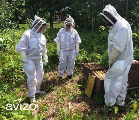 Trois apiculteurs avec leur équipement de protection individuel près de ruches