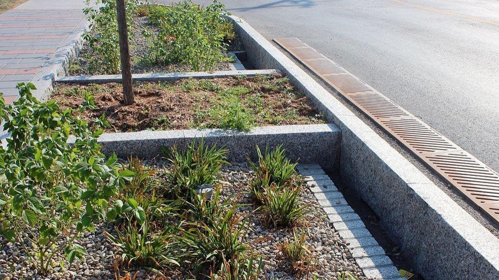 Un aménagement destiné a recueillir l'eau de pluie avec un arbre et des végétaux
