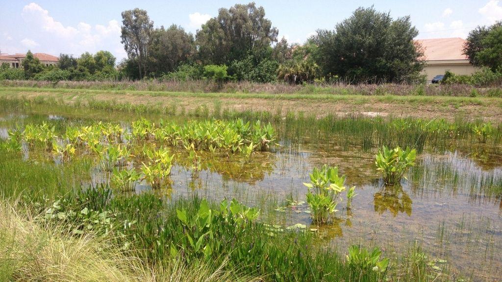 Une étendue d'eau de quelques pouces de profondeur avec toutes sortes de végétaux