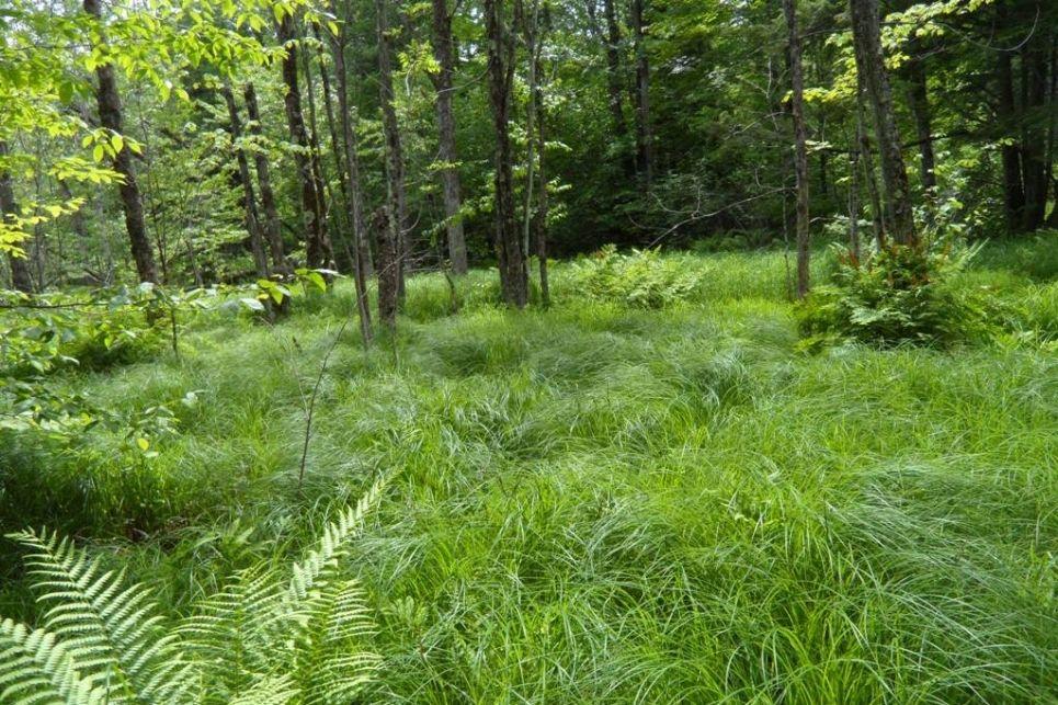 un sous-bois dont la végétation dense semble indiquer la présence d'un milieu humide