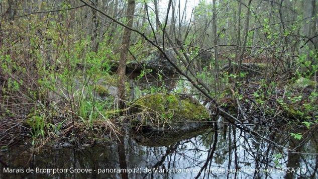 Un marécage comportant une bonne quantité d'arbres et d'arbustes