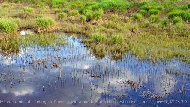 Un étang dans le bas de l'image cède la place à des végétaux dans le haut de l'image